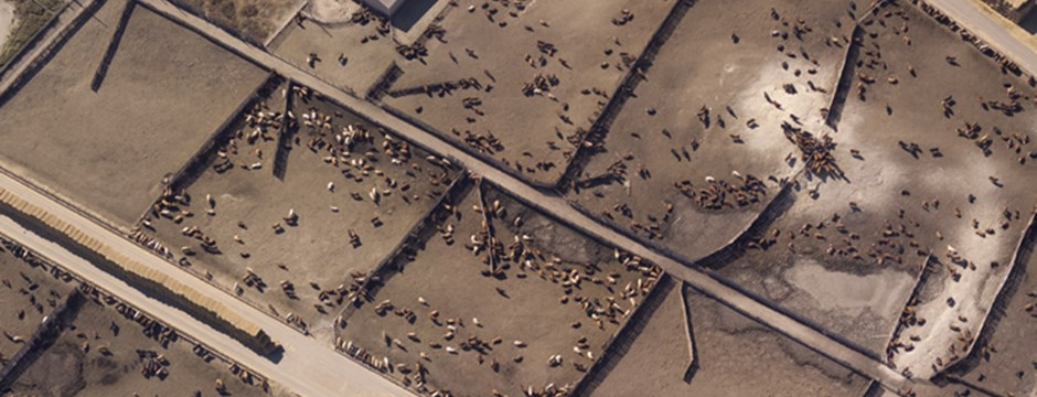 Farmageddon - factory farm from above