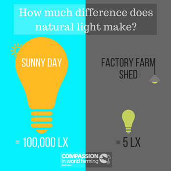 Natural Light Infographic.png