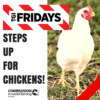 fridays for chickens.png