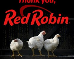 Red robin thank you.jpg