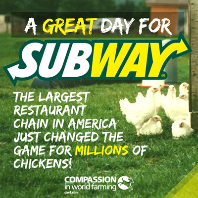 Subway Makes Changes For Chickens Compassion Usa